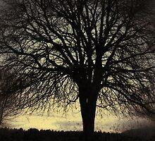 Gone with the Wind by JOSEPHMAZZUCCO