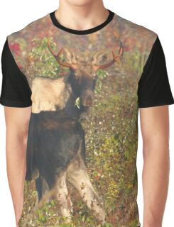 Maine Bull Moose Graphic T-Shirt