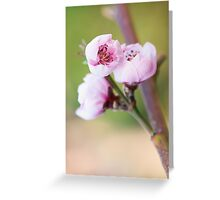 Spring pink cherry blossom with green background Greeting Card