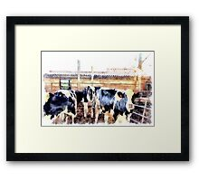 Cows Framed Print