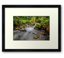 Swiss Glade. Framed Print