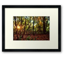 Magic in Wild Woods Framed Print
