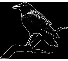 Crow (for dark backgrounds) Photographic Print