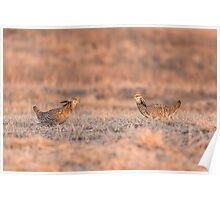 Prairie Chickens 2013-1 Poster