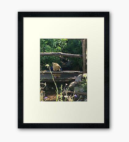 Winnie the Pooh Photograph Framed Print