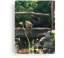 Winnie the Pooh Photograph Canvas Print
