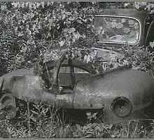 Beloved of the Hedgerow by Sean Phelan