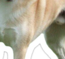 Shiba Inu  Sticker