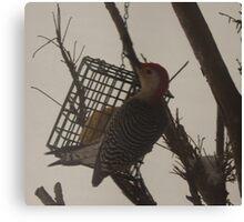 Beautiful Bright Bird / Woodpecker               Pentax X-5 Series Canvas Print