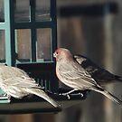 Birds on A Bird Feeder, Santa Fe, New Mexico by lenspiro