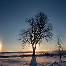 Sundogs Around A Tree by Deb Fedeler