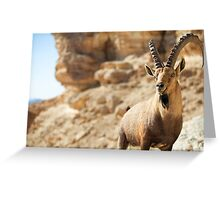 Male Nubian Ibex (Capra ibex nubiana), standing on edge of the Ramon crater, Negev Desert, Israel Greeting Card
