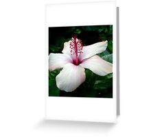 Beautiful White Hawaiian Hibiscus Greeting Card
