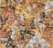 Spicy Moth Photographic Print