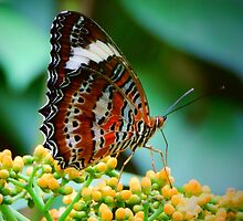 Butterfly Beauty by JaneIzzyPhoto