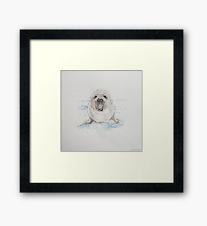 Swift Art, Baby seal Framed Print