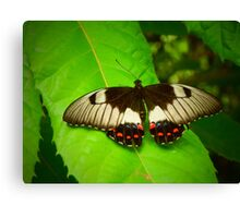 Patterned Butterfly Canvas Print