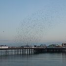 Starling Murmuration over Brighton Pier by Sue Robinson