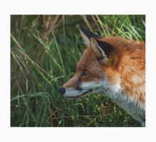 Red Fox Profile Kids Clothes