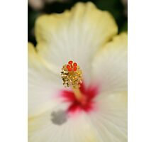 Close Up of Stamen And Pollen Yellow Hibiscus Photographic Print