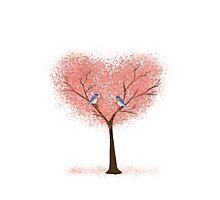 Bluebird Blossoms Photographic Print