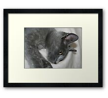 Close Up Portrait Of A Relaxed Grey Cat Framed Print