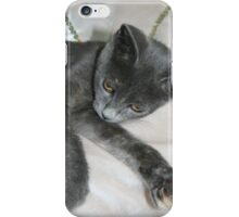 Cute Grey Kitten Relaxing iPhone Case/Skin