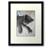 Cute Grey Kitten Relaxing Framed Print
