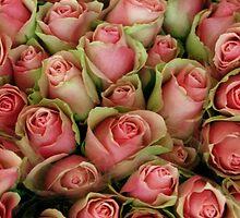 Pink Rose Series-1 by Tamarra