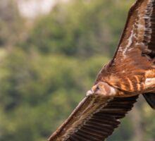 Griffon Vulture in flight Sticker