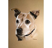 Stella - the beautiful Red Staffie Photographic Print