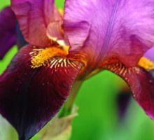 Glowing Iris Sticker