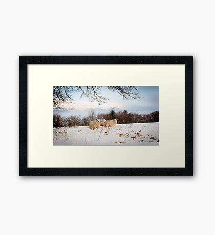 Winter Wool Framed Print