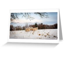 Winter Wool Greeting Card