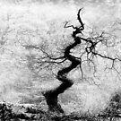 twisted tree by marshall calvert  IPA