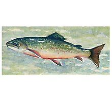 Brook Trout 01 Photographic Print