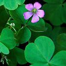 One Single Flower by Heather Friedman