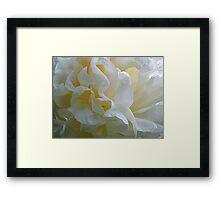 Peony Petals^ Framed Print