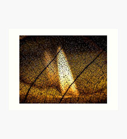 Flame's Reflection Art Print