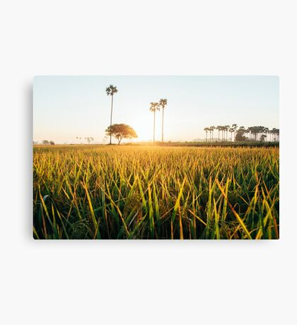 Sunrise Over Grass Field in Burmese Countryside Canvas Print