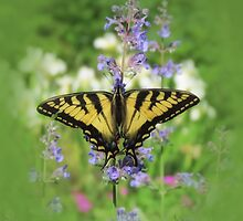 Swallowtail Floral - Butterfly by MTBobbins