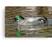 Falcated Duck Canvas Print