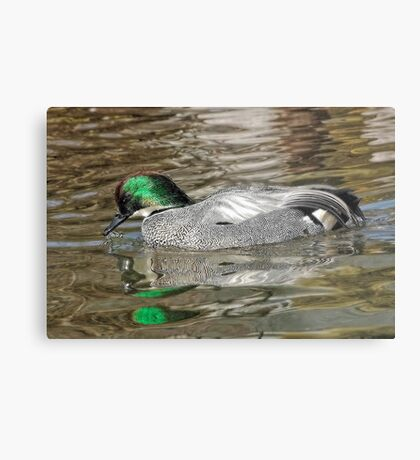 Falcated Duck Metal Print