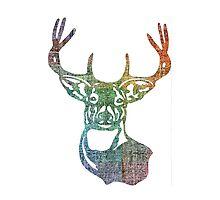 Plaid Buck Deer Head Photographic Print