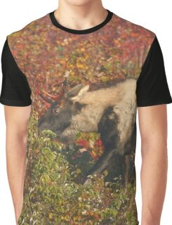 Maine Piebald Bull Moose  Graphic T-Shirt