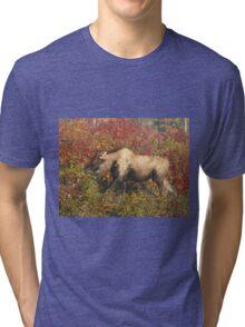 Maine Piebald Bull Moose  Tri-blend T-Shirt
