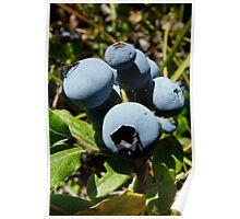 Blue Berries Poster