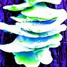 flourescent fungus by ariyahjoseph