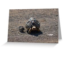 Baby Leopard Tortoise Greeting Card