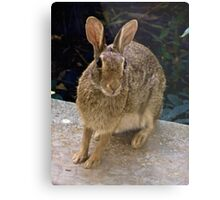 Peter Rabbit Pays a Visit Metal Print